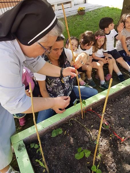 la pianta di fagiolo (3)