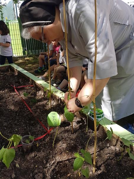 la pianta di fagiolo (4)