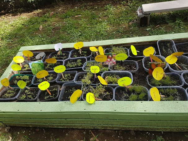 semenzaio all'esterno (4)