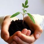 le_piante